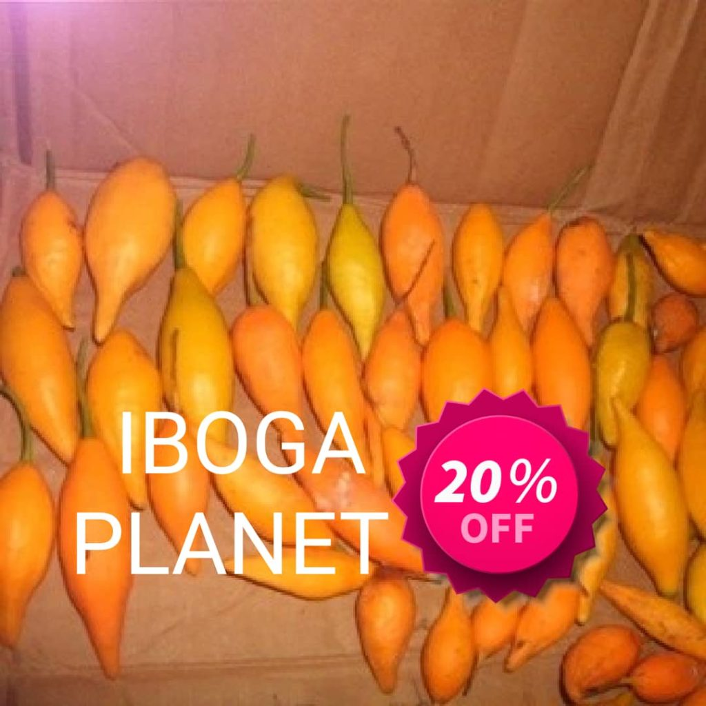 Iboga seeds for sale, buy iboga seeds online, iboga seed pot for sale, buy iboga seed pot online, order iboga seeds online, buying iboga seeds online, tabernanthe iboga seeds for sale, buy tabernanthe iboga seeds for sale,